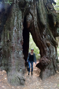 Me in a redwood tree.
